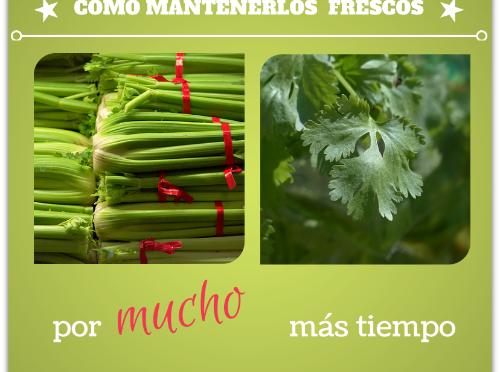 como mantener frescos apio culantro cilantro