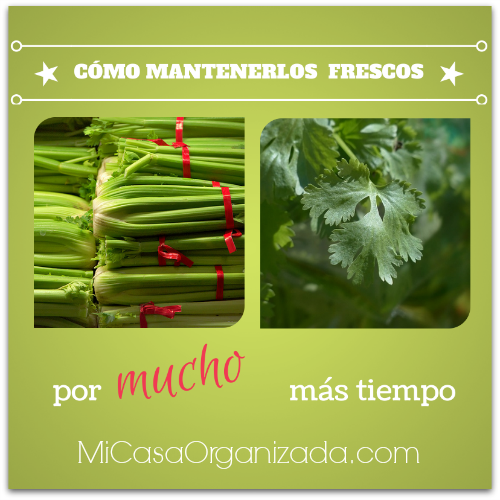 Cómo Conservar El Apio y El Culantro (cilantro) Frescos